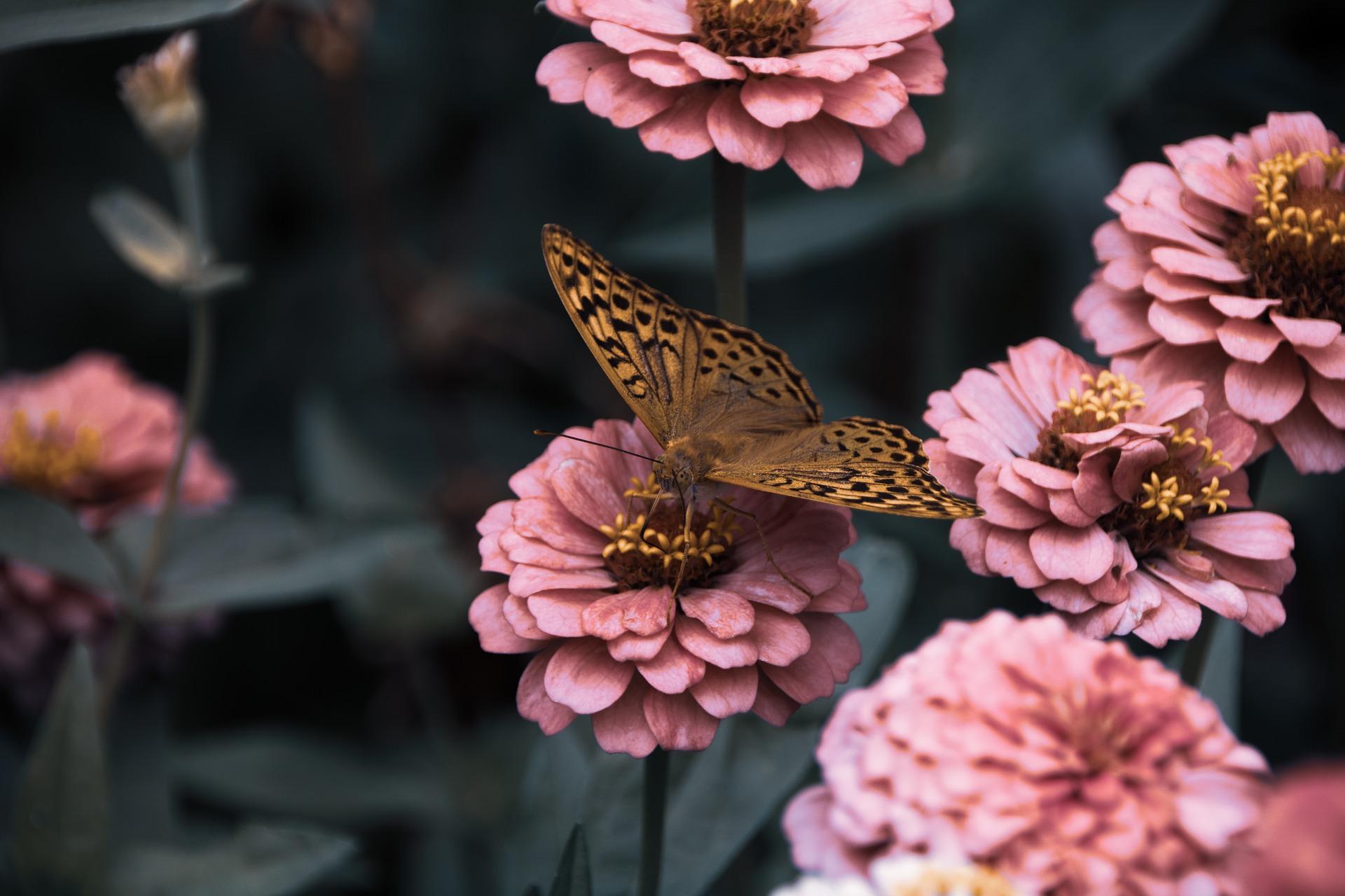 La tiroide: una farfalla con…cinquanta sfumature di rosa